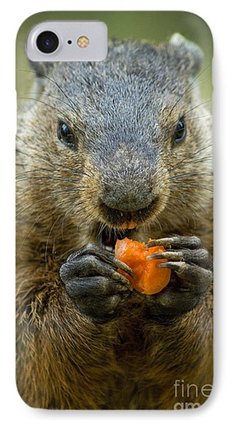 Groundhogs Favorite Snack IPhone Case