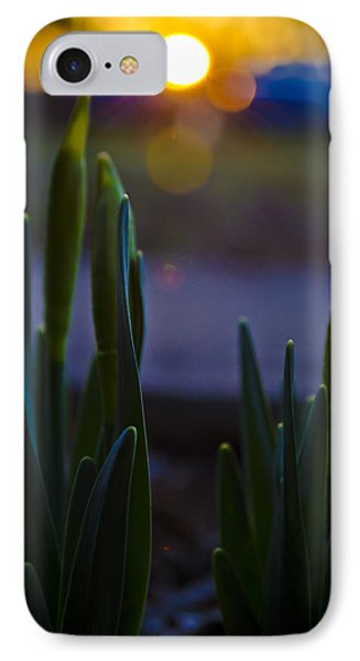 Growing In The Late Evening Sun IPhone Case