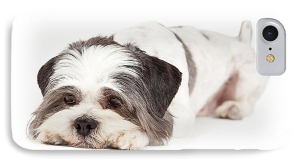 Guilty Looking Lhasa Apso Dog Laying IPhone Case