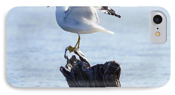 Gull - Able IPhone Case