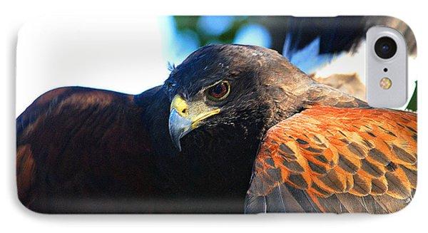 Harris Hawk - Close Up IPhone Case