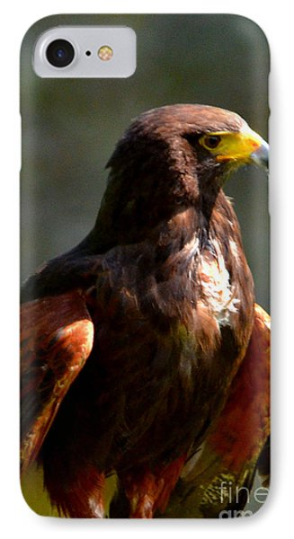 Harris Hawk In Thought IPhone Case