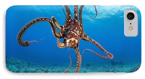 Hawaii, Day Octopus _octopus Cyanea_. IPhone Case