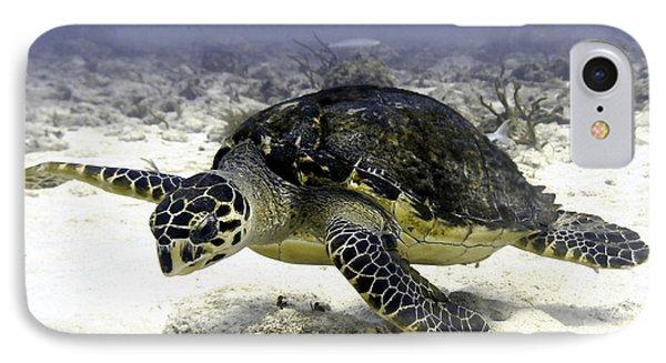 Hawksbill Caribbean Sea Turtle IPhone Case