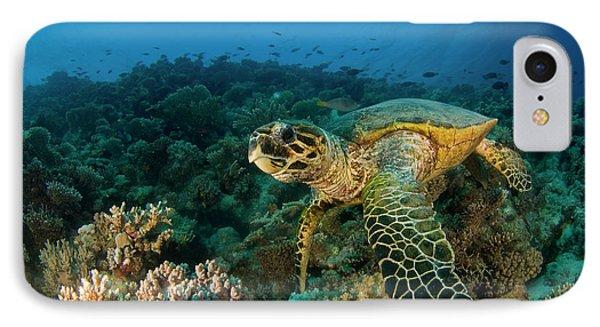 Egyptian iPhone 8 Case - Hawksbill Sea Turtle by Ilan Ben Tov