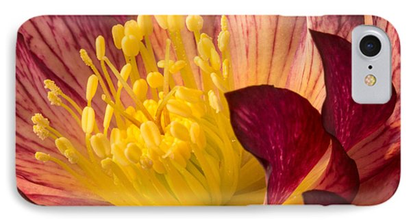 Hellebore Ruby Yellow Glow IPhone Case