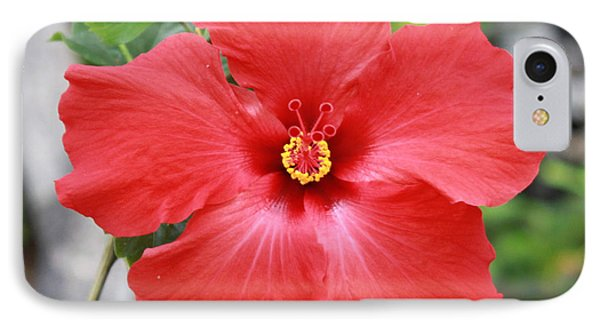 Hibiscus All Profit Go To Hospice Of The Calumet Area IPhone Case