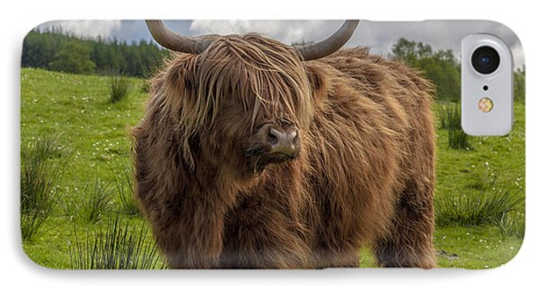 High Know Brown Cow IPhone Case