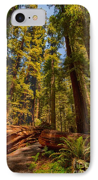 Hikers Paradise - California Redwoods I IPhone Case