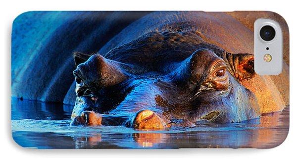 Hippopotamus  At Sunset IPhone Case
