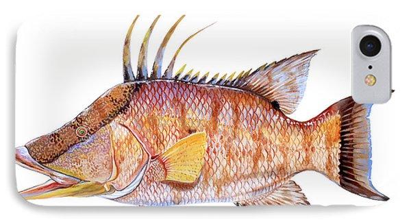 Hog Fish IPhone Case