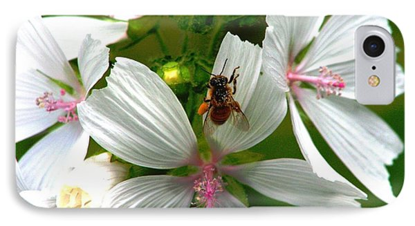 Honey Bee In The Mallow IPhone Case