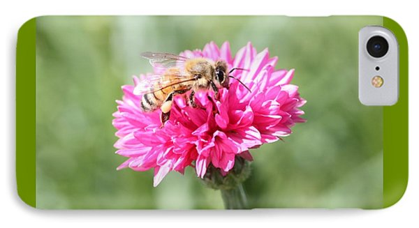 Honeybee On Pink Bachelor's Button IPhone Case
