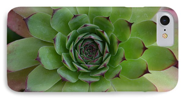 Houseleek Sempervivum IPhone Case
