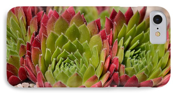 Houseleeks Aka Sempervivum From The Side IPhone Case
