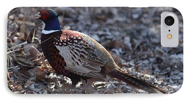 Howard County Pheasant IPhone Case