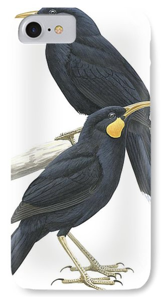 Huia IPhone Case