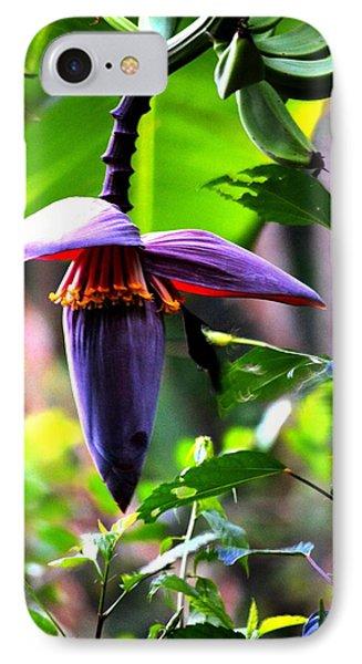 Hummingbird And Banana Tree IPhone Case
