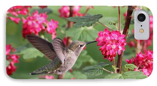 Hummingbird In The Flowering Currant IPhone Case