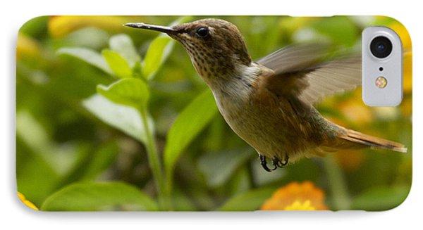 Hummingbird Looking For Food IPhone Case