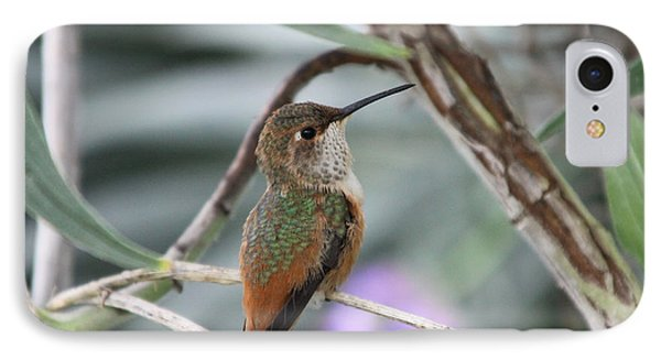 Hummingbird On A Branch IPhone Case
