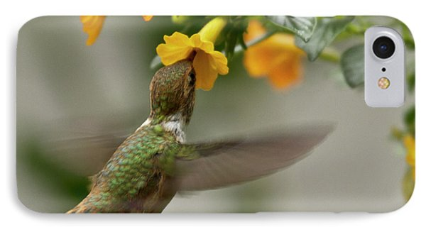 Hummingbird Sips Nectar IPhone Case
