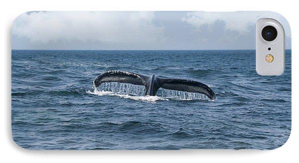 Humpback Whale Fin IPhone Case
