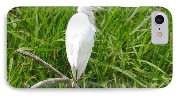 Immature Little Blue Heron On Watch IPhone Case
