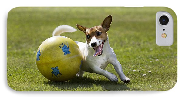 Jack Russell Terrier Plays With Ball IPhone Case