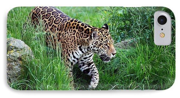 Jaguar On The Prowl IPhone Case