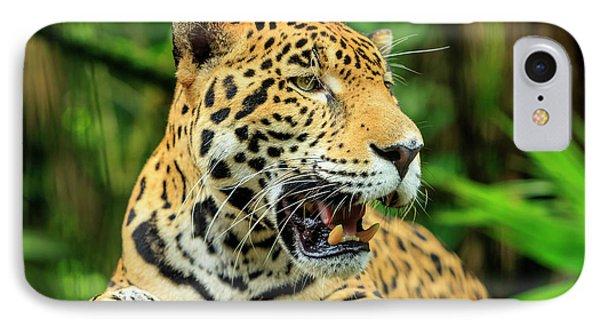 Belize iPhone 8 Case - Jaguar (panthera Onca by Stuart Westmorland