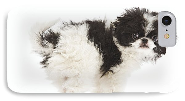 Japanese Chin Puppy IPhone Case