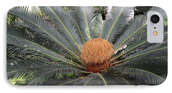 Japanese Cycad IPhone Case