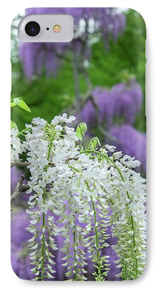 Japanese Wisteria, Longwood Gardens IPhone Case
