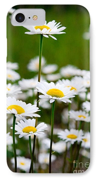 Jasper - Oxeye Daisy Wildflower 2 IPhone Case