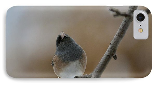 Junco Looking Up IPhone Case