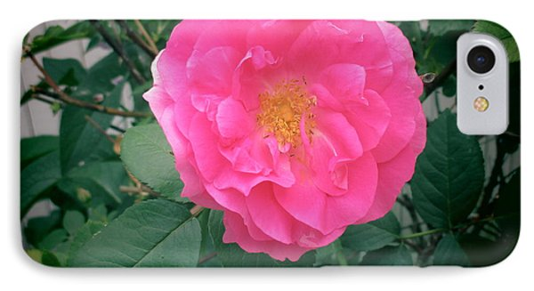 June Rose I IPhone Case