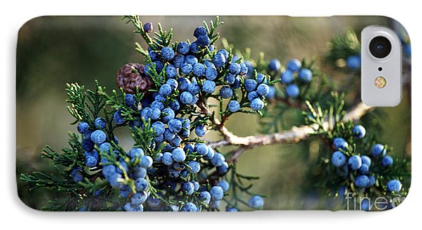 Juniper Berries IPhone Case