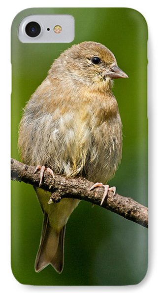Juvenile American Goldfinch IPhone Case