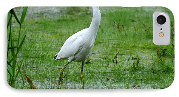Juvenile Little Blue Heron In Search Of Food IPhone Case