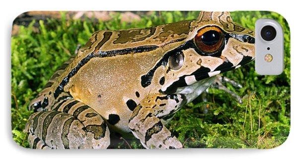 Juvenile Smoky Jungle Frog IPhone Case