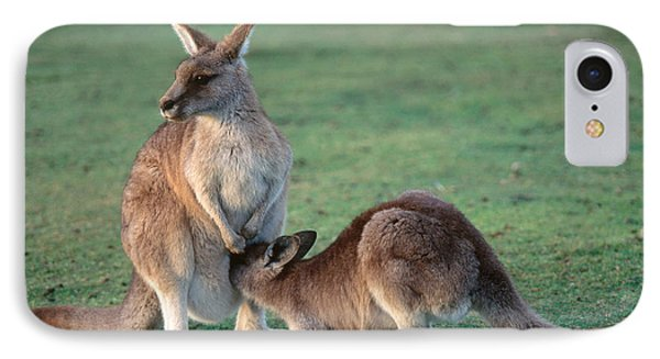 Kangaroo With Joey IPhone Case