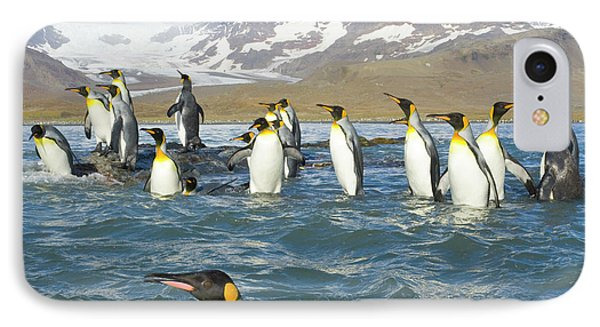 King Penguins Swimming St Andrews Bay IPhone Case
