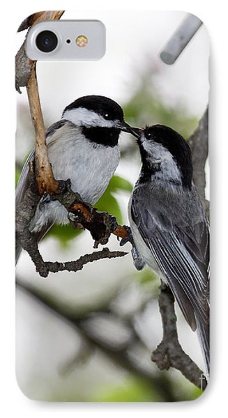 Kissing Chickadees IPhone Case