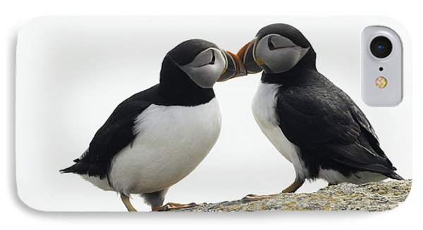 Kissing Puffins IPhone Case