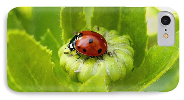 Lady Bug In The Garden IPhone Case