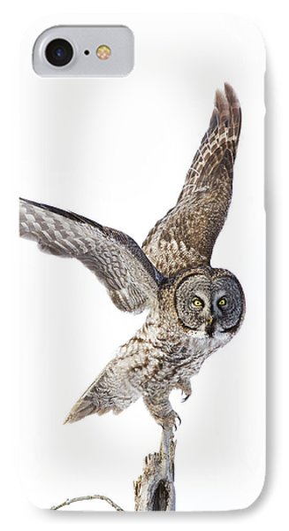 Lapland Owl On White IPhone Case