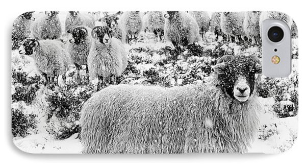 Sheep iPhone 8 Case - Leader Of The Flock by Janet Burdon