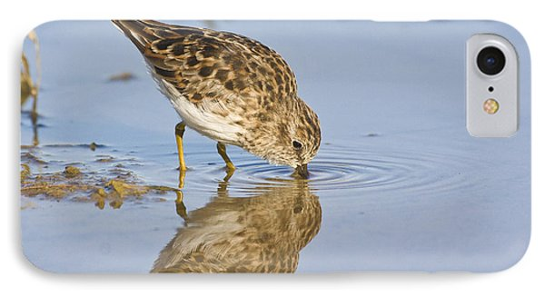 Least Sandpiper With A Reflection  IPhone Case