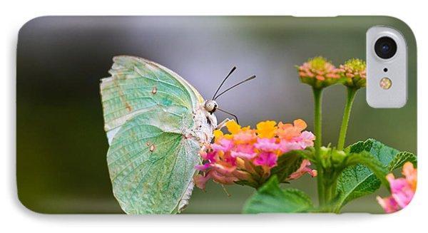 Lemon Emigrant Butterfly IPhone Case